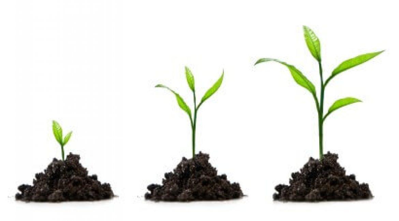 Cómo conseguir ventas con una estrategia de lead nurturing